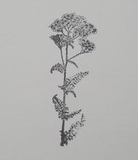 Flower soft technique scrapbooking