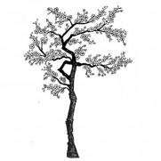 Lavinia Étampe Cerisier en fleurs