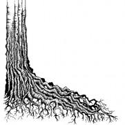 Lavinia Étampe Racine d'arbre