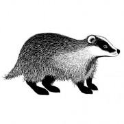 Lavinia Étampe Badger