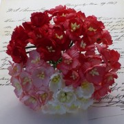 WOC Fleurs Cherry Blossoms rouges/blanches