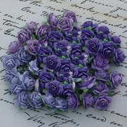 WOC Roses Mixtes mauves lilas