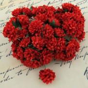WOC Fleurs Aster Daisy rouges