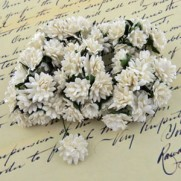 WOC Fleurs Aster Daisy blanches