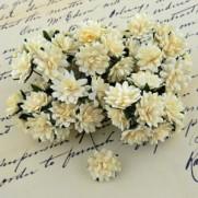 WOC Fleurs Aster Daisy ivoires