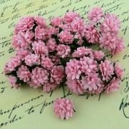 WOC Fleurs Aster Daisy roses bébé