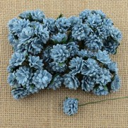 WOC Fleurs Aster Daisy bleues bébé
