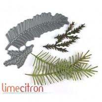 Limecitron die Branches de sapin
