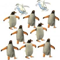 Brads Pingouins