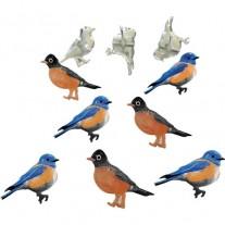 Brads Oiseaux