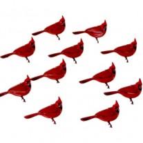 Brads Cardinals