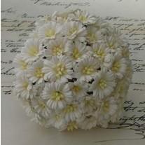 WOC Fleurs Cosmos Daisy Blanches